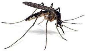 Κουνουπια
